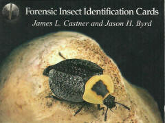 Forensic insect carrds